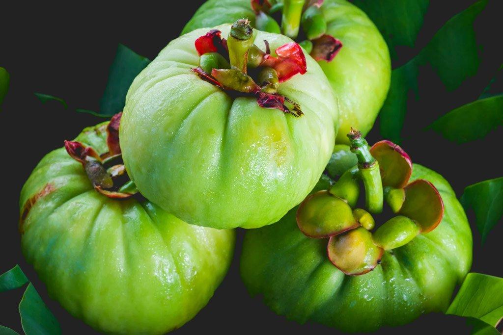 garcinia cambogia fruits
